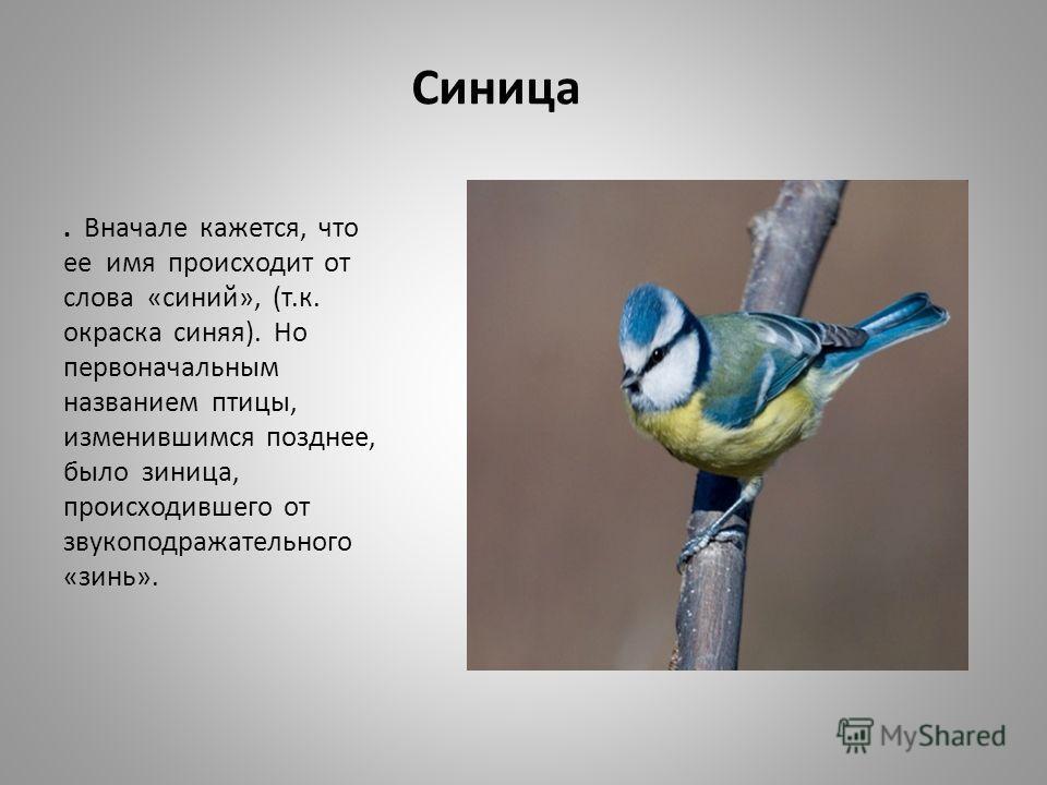 Синица. Вначале кажется, что ее имя происходит от слова «синий», (т.к. окраска синяя). Но первоначальным названием птицы, изменившимся позднее, было зиница, происходившего от звукоподражательного «зинь».
