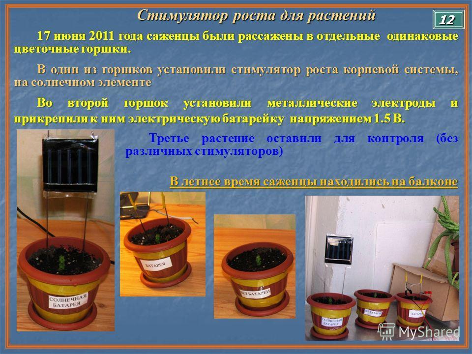 Стимулятор роста для растений Стимулятор роста для растений 17 июня 2011 года саженцы были рассажены в отдельные одинаковые цветочные горшки. В один из горшков установили стимулятор роста корневой системы, на солнечном элементе Во второй горшок устан