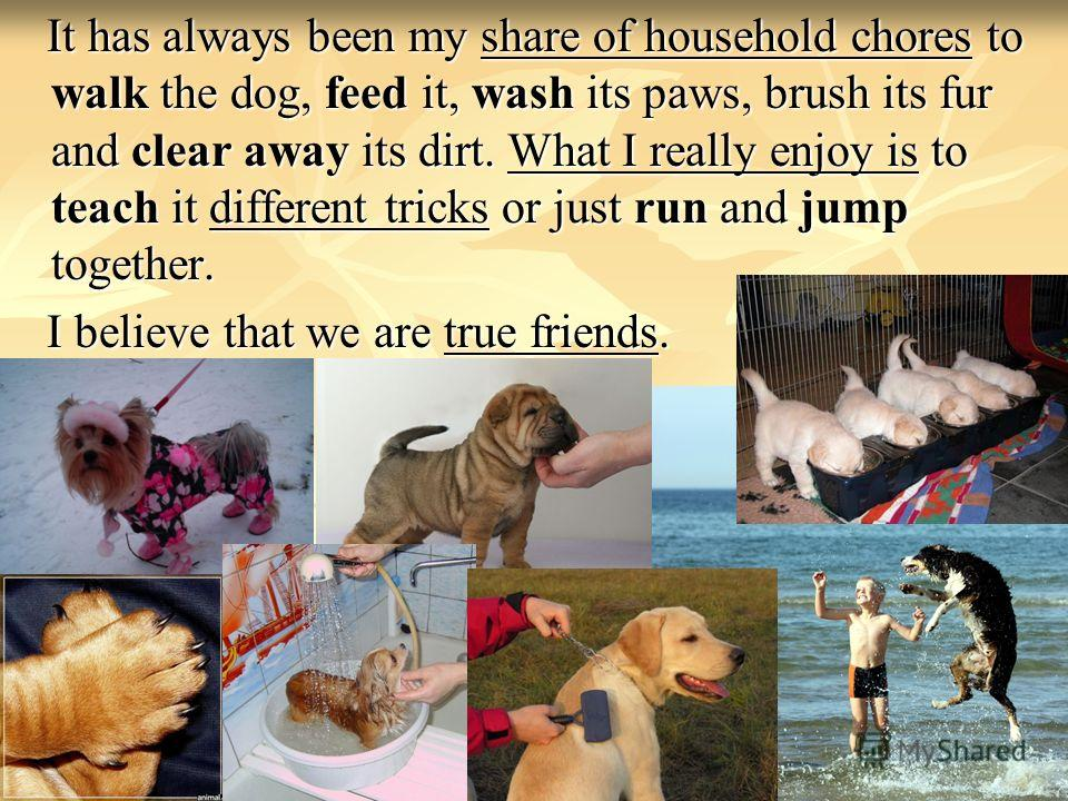 It has always been my share of household chores to walk the dog, feed it, wash its paws, brush its fur and clear away its dirt. What I really enjoy is to teach it different tricks or just run and jump together. It has always been my share of househol