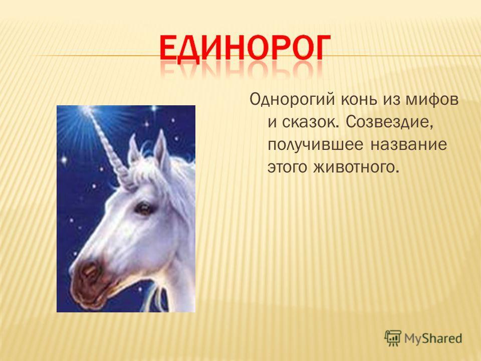 Однорогий конь из мифов и сказок. Созвездие, получившее название этого животного.