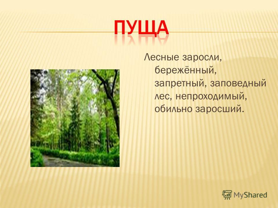 Лесные заросли, бережённый, запретный, заповедный лес, непроходимый, обильно заросший.