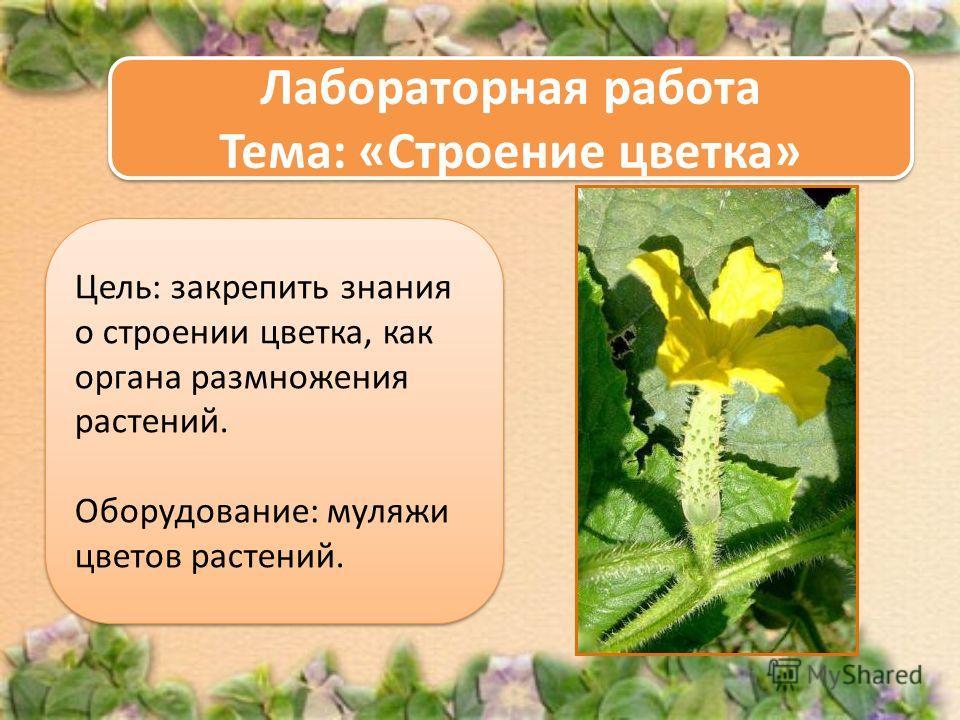 Цель: закрепить знания о строении цветка, как органа размножения растений. Оборудование: муляжи цветов растений. Цель: закрепить знания о строении цветка, как органа размножения растений. Оборудование: муляжи цветов растений. Лабораторная работа Тема
