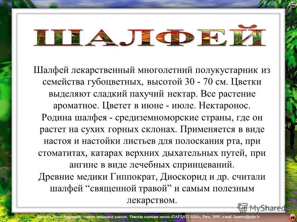 Шалфей лекарственный многолетний полукустарник из семейства губоцветных, высотой 30 - 70 см. Цветки выделяют сладкий пахучий нектар. Все растение ароматное. Цветет в июне - июле. Нектаронос. Родина шалфея - средиземноморские страны, где он растет на