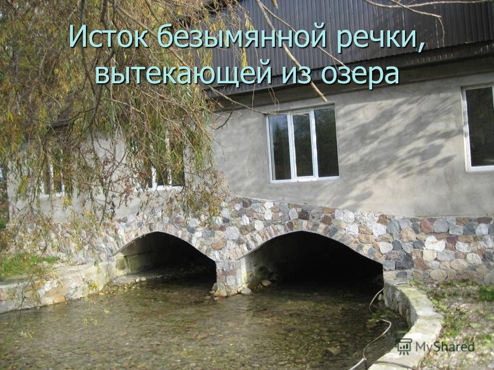 Исток безымянной речки, вытекающей из озера