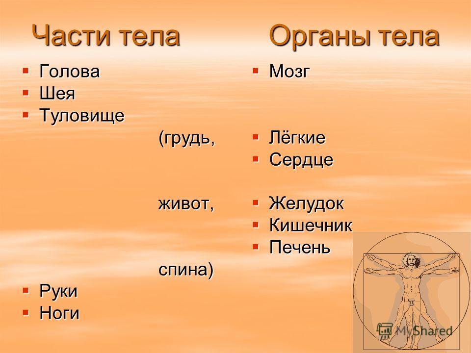 Строение тела человека Внешнее части тела Внутреннее органы