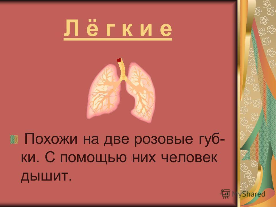 Головной мозг Управляет нашими мыслями, чувствами, движениями, следит за работой главных внутренних органов – сердца и лёгких.