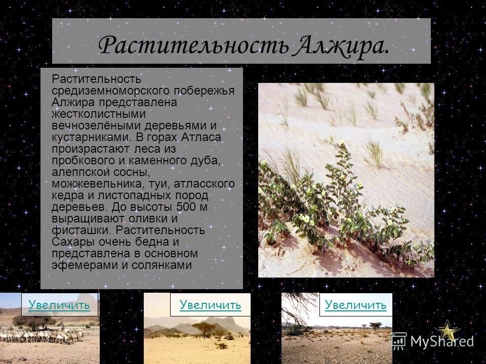 Растительность средиземноморского побережья Алжира представлена жестколистными вечнозелёными деревьями и кустарниками. В горах Атласа произрастают леса из пробкового и каменного дуба, алеппской сосны, можжевельника, туи, атласского кедра и листопадны
