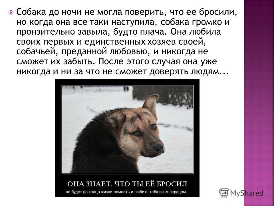 Собака до ночи не могла поверить, что ее бросили, но когда она все таки наступила, собака громко и пронзительно завыла, будто плача. Она любила своих первых и единственных хозяев своей, собачьей, преданной любовью, и никогда не сможет их забыть. Посл
