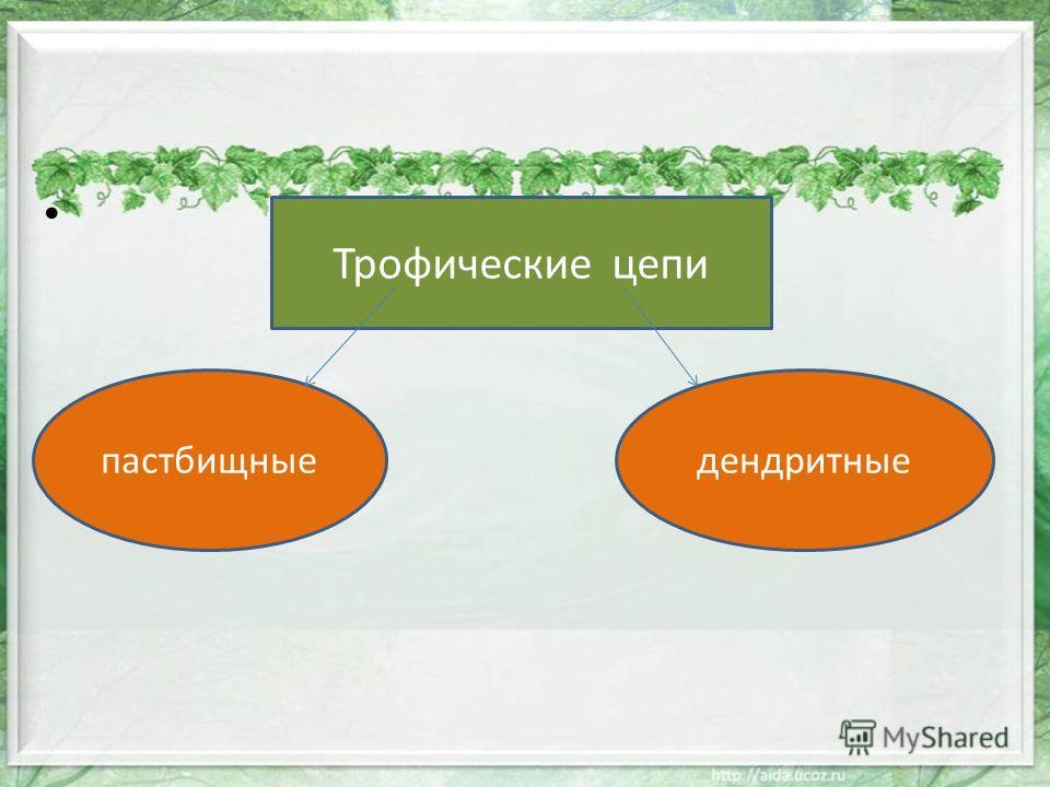 Трофические цепи пастбищныедендритные