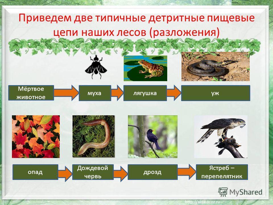 наших лесов (разложения)