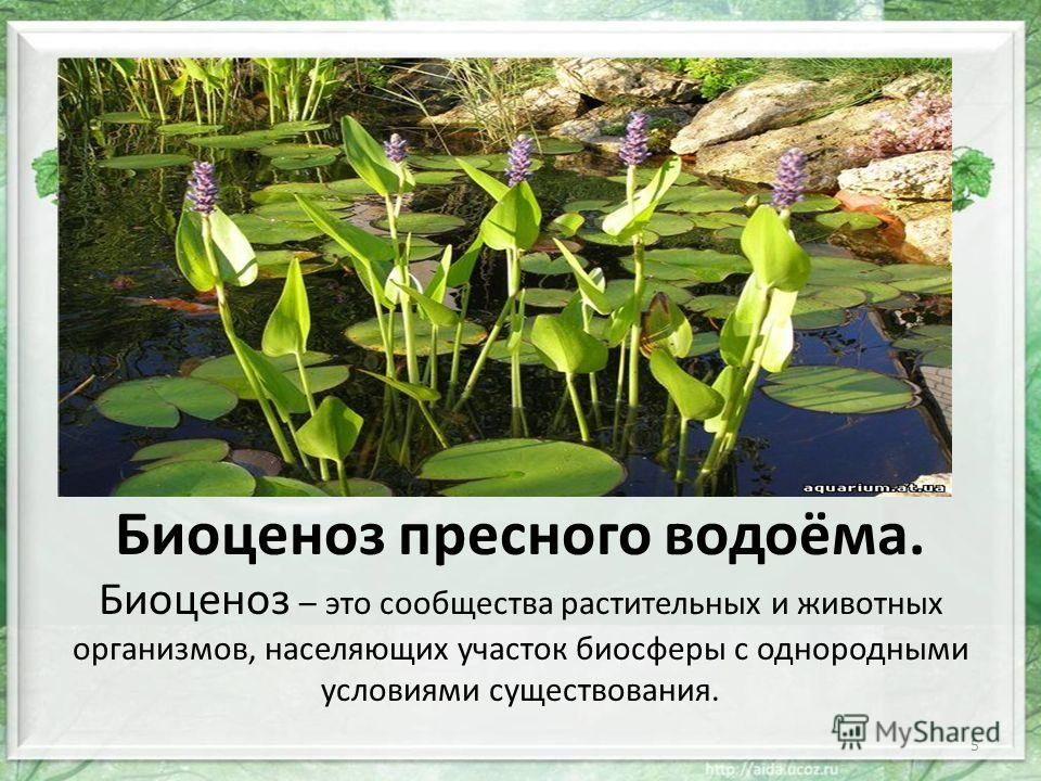 Биоценоз пресного водоёма.