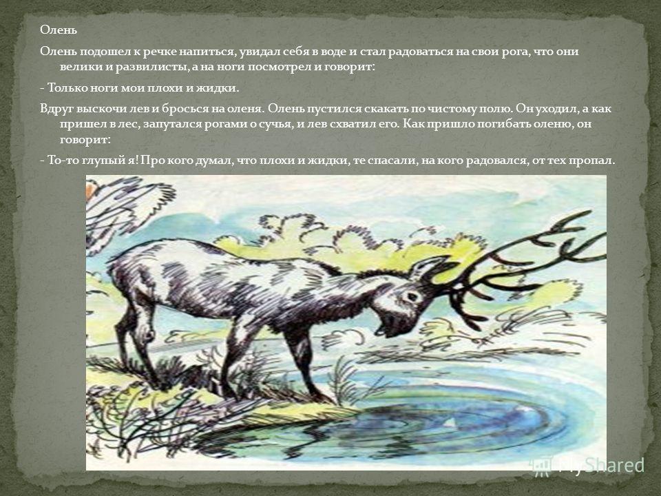 Олень Олень подошел к речке напиться, увидал себя в воде и стал радоваться на свои рога, что они велики и развилисты, а на ноги посмотрел и говорит: - Только ноги мои плохи и жидки. Вдруг выскочи лев и бросься на оленя. Олень пустился скакать по чист