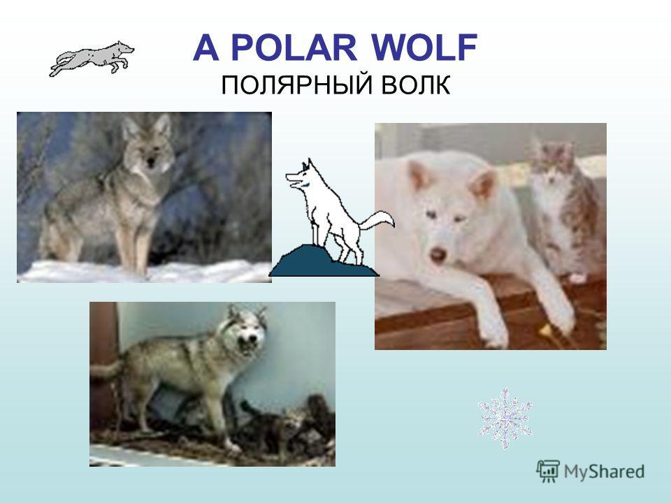 Скачать видео Природа Красноярский Край - картинка 2