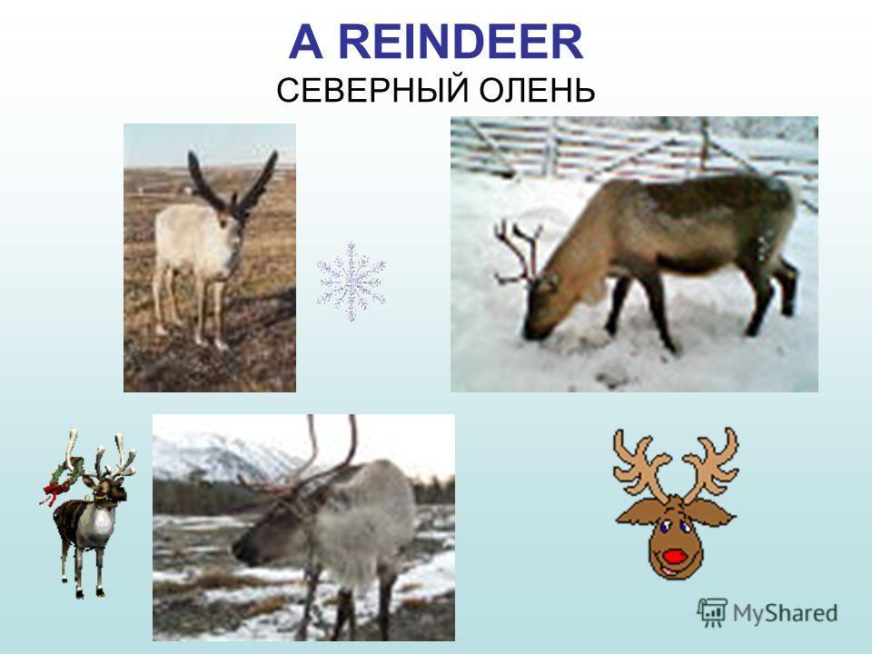 Скачать видео Природа Красноярский Край - картинка 4