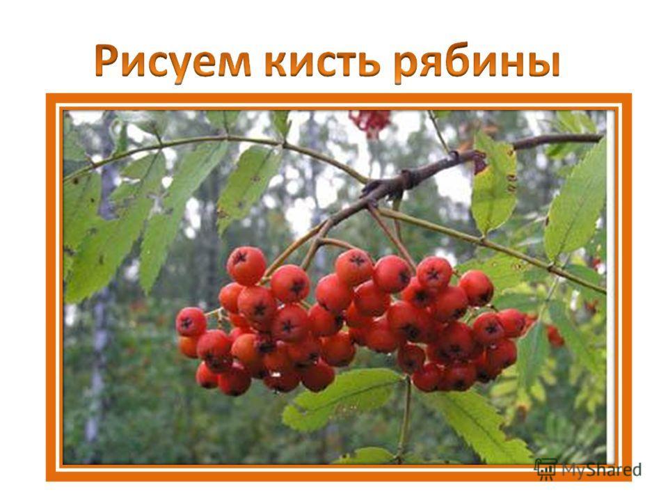 Лекарственные Растения Оренбургской Области Презентация