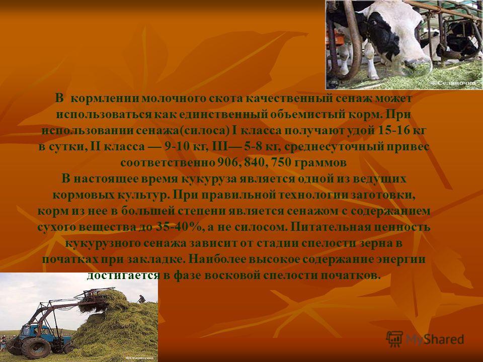 В кормлении молочного скота качественный сенаж может использоваться как единственный объемистый корм. При использовании сенажа(силоса) I класса получают удой 15-16 кг в сутки, II класса 9-10 кг, III 5-8 кг, среднесуточный привес соответственно 906, 8