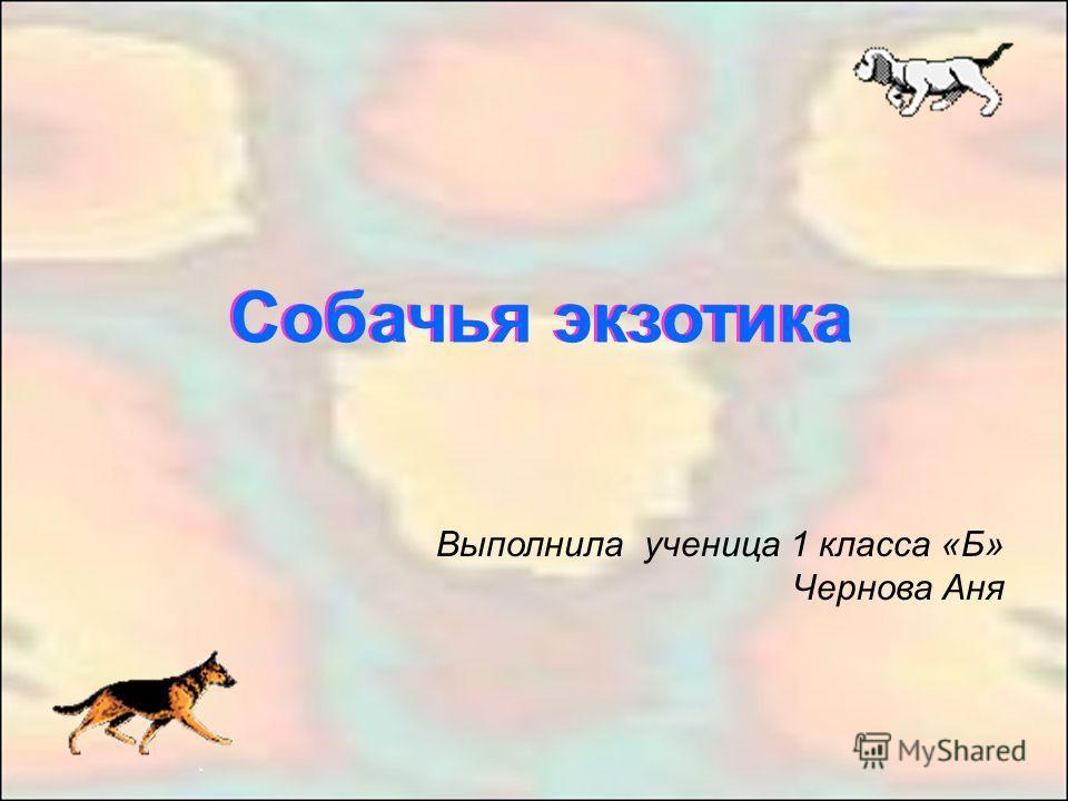 Собачья экзотика Выполнила ученица 1 класса «Б» Чернова Аня