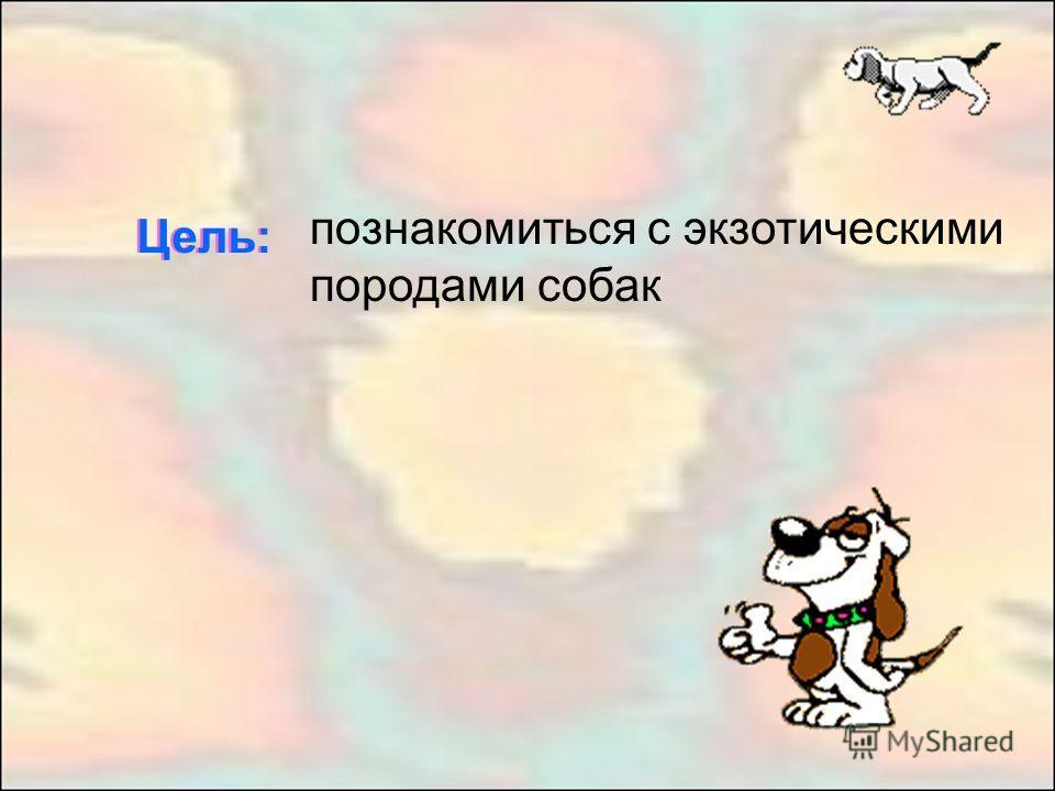 познакомиться с экзотическими породами собак Цель:
