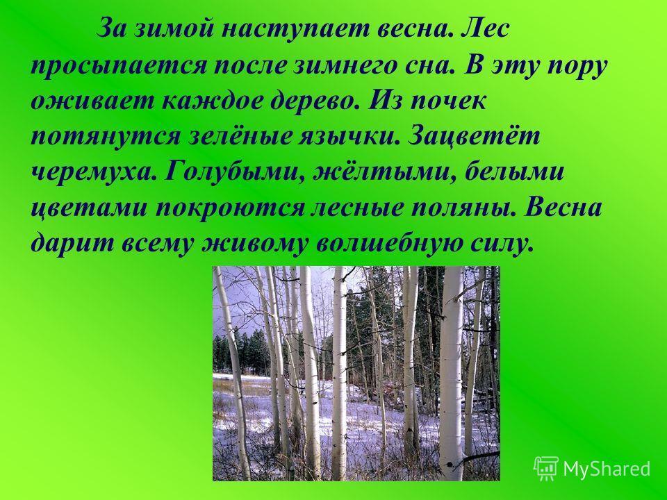 За зимой наступает весна. Лес просыпается после зимнего сна. В эту пору оживает каждое дерево. Из почек потянутся зелёные язычки. Зацветёт черемуха. Голубыми, жёлтыми, белыми цветами покроются лесные поляны. Весна дарит всему живому волшебную силу.