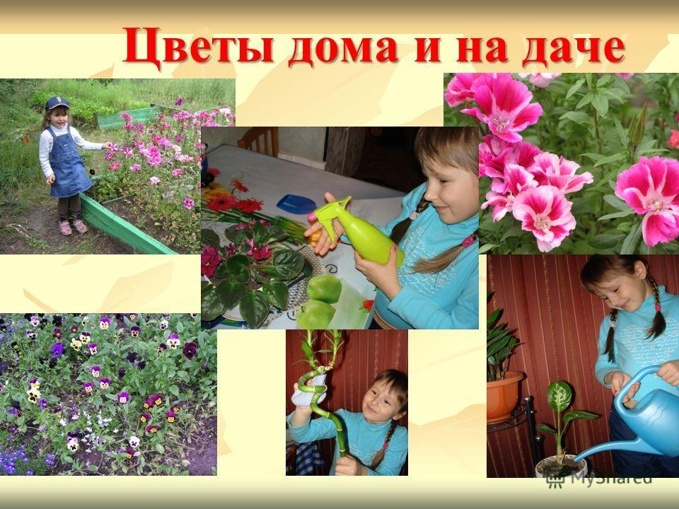 Цветы дома и на даче
