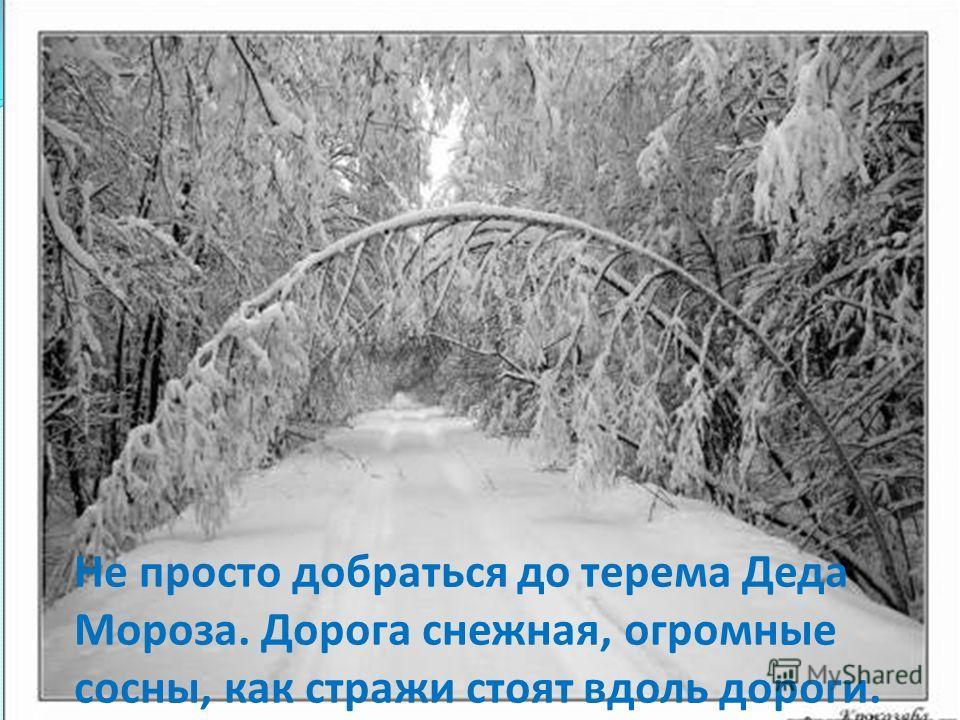 Не просто добраться до терема Деда Мороза. Дорога снежная, огромные сосны, как стражи стоят вдоль дороги.