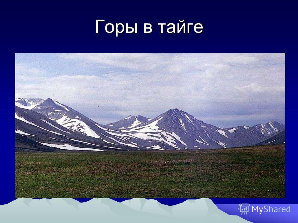 Горы в тайге