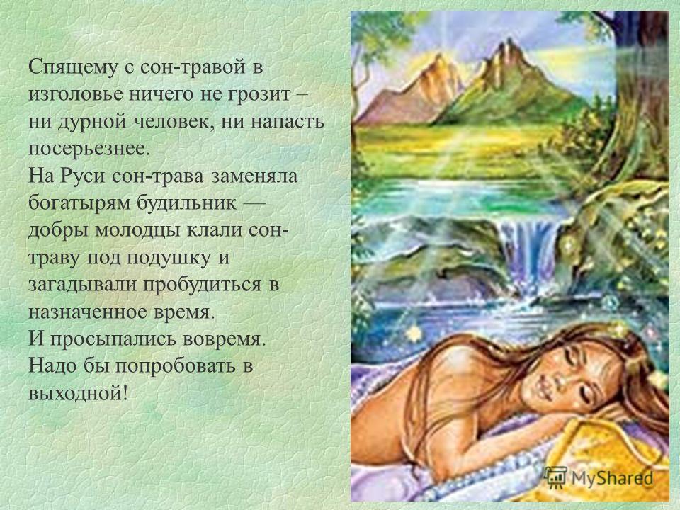 Спящему с сон-травой в изголовье ничего не грозит – ни дурной человек, ни напасть посерьезнее. На Руси сон-трава заменяла богатырям будильник добры молодцы клали сон- траву под подушку и загадывали пробудиться в назначенное время. И просыпались вовре