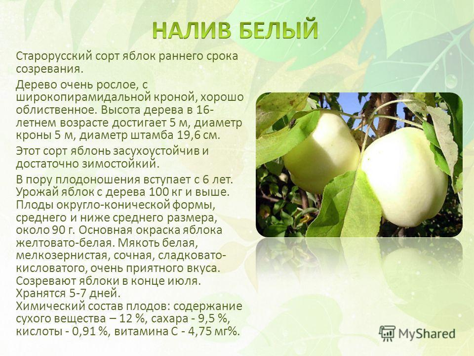 Старорусский сорт яблок раннего срока созревания. Дерево очень рослое, с широкопирамидальной кроной, хорошо облиственное. Высота дерева в 16- летнем возрасте достигает 5 м, диаметр кроны 5 м, диаметр штамба 19,6 см. Этот сорт яблонь засухоустойчив и