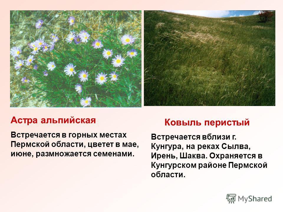 Астра альпийская Встречается в горных местах Пермской области, цветет в мае, июне, размножается семенами. Ковыль перистый Встречается вблизи г. Кунгура, на реках Сылва, Ирень, Шаква. Охраняется в Кунгурском районе Пермской области.