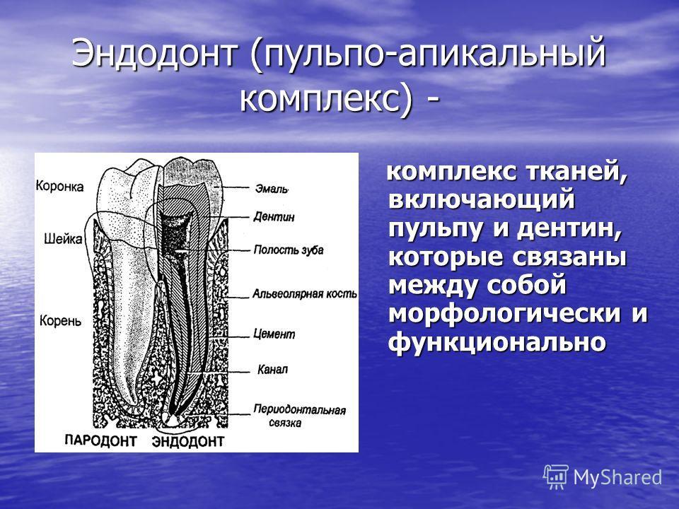 Эндодонт (пульпо-апикальный комплекс) - комплекс тканей, включающий пульпу и дентин, которые связаны между собой морфологически и функционально комплекс тканей, включающий пульпу и дентин, которые связаны между собой морфологически и функционально