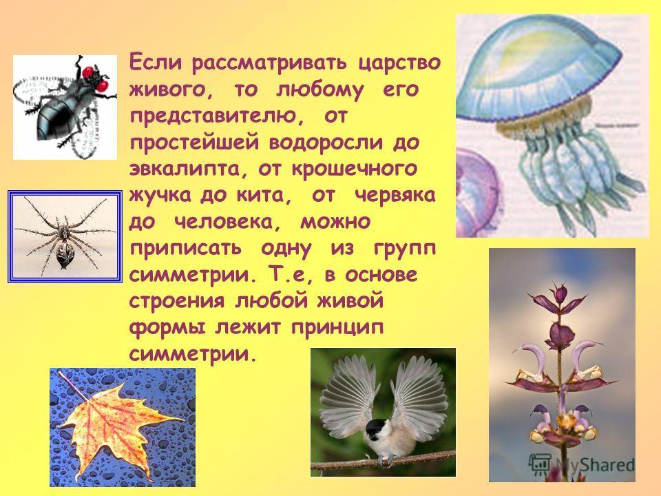 Если рассматривать царство живого, то любому его представителю, от простейшей водоросли до эвкалипта, от крошечного жучка до кита, от червяка до человека, можно приписать одну из групп симметрии. Т.е, в основе строения любой живой формы лежит принцип
