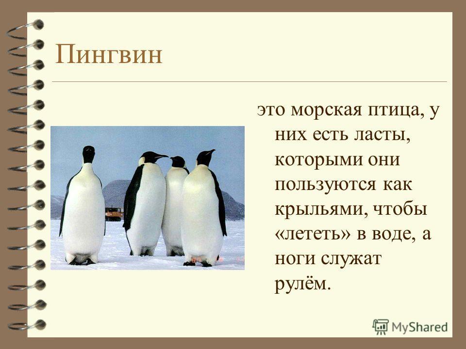 Пингвин это морская птица, у них есть ласты, которыми они пользуются как крыльями, чтобы «лететь» в воде, а ноги служат рулём.