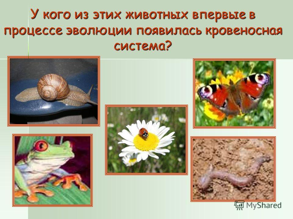 У кого из этих животных впервые в процессе эволюции появилась кровеносная система?