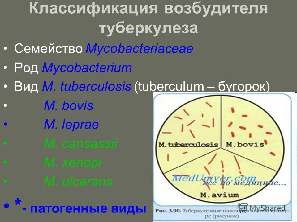 Классификация возбудителя туберкулеза Семейство Mycobacteriaceae Род Mycobacterium Вид M. tuberculosis (tuberculum – бугорок) М. bovis M. leprae M. cansassii M. xenopi M. ulcerans * - патогенные виды