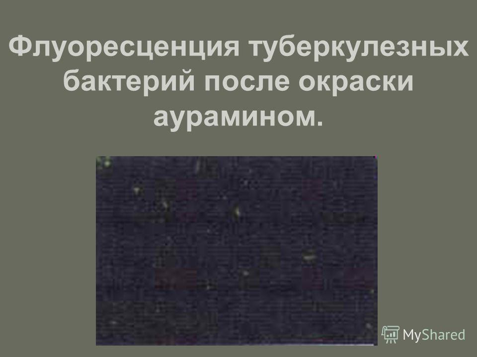 Флуоресценция туберкулезных бактерий после окраски аурамином.