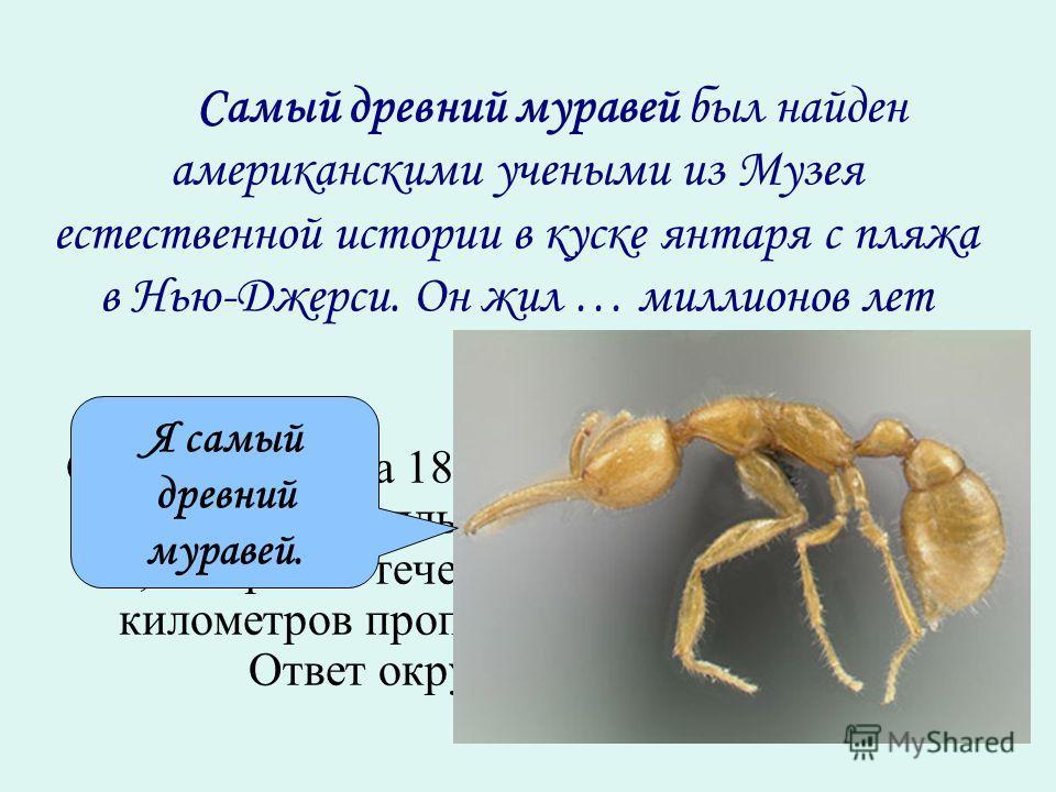 Самый древний муравей был найден американскими учеными из Музея естественной истории в куске янтаря с пляжа в Нью-Джерси. Он жил … миллионов лет назад. Скорость катера 18,4 км/ч, а скорость течения 3,8 км/ч. Катер плыл 3,2 ч по течению реки и 4,3 ч п