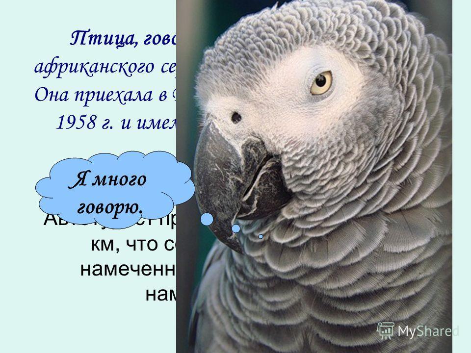 Птица, говорящая лучше всех - самка африканского серого попугая по имени Прадл. Она приехала в Великобританию из Уганды в 1958 г. и имела удивительный словарный запас из … слов. Автотурист проехал в первый день 120 км, что составляет 15% всего намече