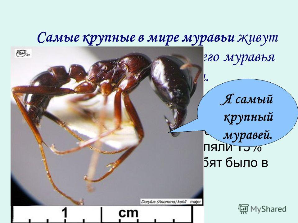Самые крупные в мире муравьи живут в Африке. Длина тела рабочего муравья составляет … мм. На водопой пригнали 220 лошадей и жеребят. Жеребята составляли 15% всего табуна. Сколько жеребят было в табуне? Я самый крупный муравей.