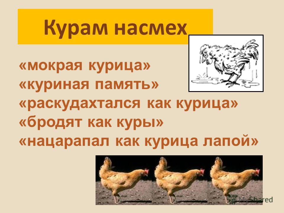 Курам насмех «мокрая курица» «куриная память» «раскудахтался как курица» «бродят как куры» «нацарапал как курица лапой»