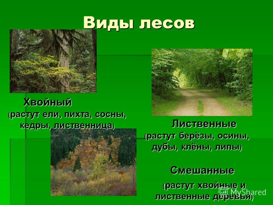 Виды лесов хвойный лиственные