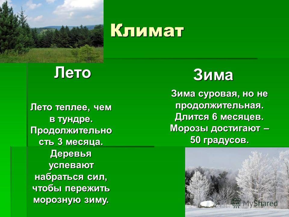 Климат Лето Зима Лето теплее, чем в тундре. Продолжительно сть 3 месяца. Деревья успевают набраться сил, чтобы пережить морозную зиму. Зима суровая, но не продолжительная. Длится 6 месяцев. Морозы достигают – 50 градусов.