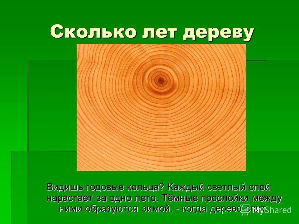 Сколько лет дереву Видишь годовые кольца? Каждый светлый слой нарастает за одно лето. Тёмные прослойки между ними образуются зимой, - когда дерево спит.