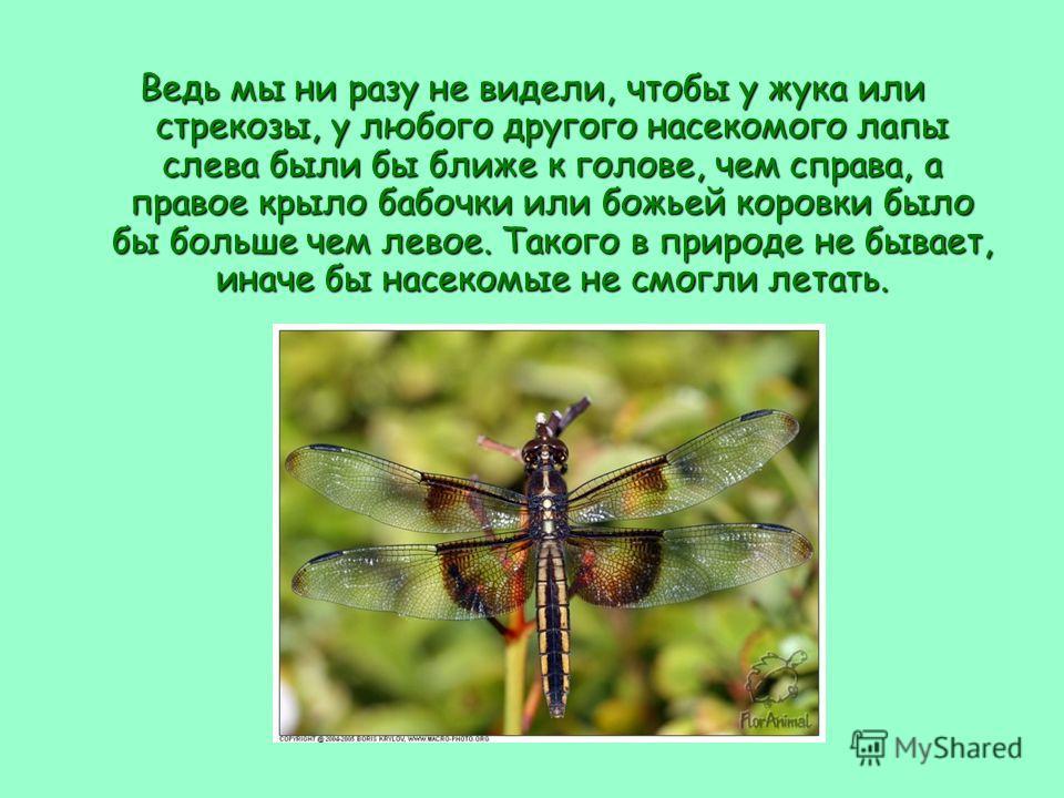 Ведь мы ни разу не видели, чтобы у жука или стрекозы, у любого другого насекомого лапы слева были бы ближе к голове, чем справа, а правое крыло бабочки или божьей коровки было бы больше чем левое. Такого в природе не бывает, иначе бы насекомые не смо