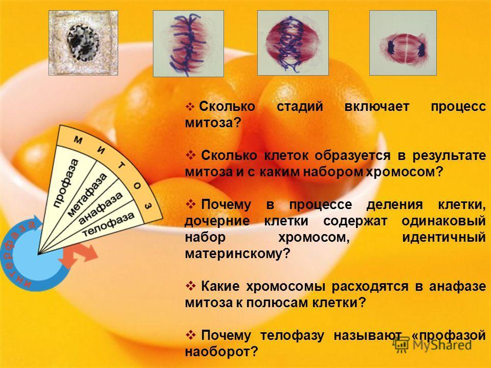 Сколько стадий включает процесс митоза? Сколько клеток образуется в результате митоза и с каким набором хромосом? Почему в процессе деления клетки, дочерние клетки содержат одинаковый набор хромосом, идентичный материнскому? Какие хромосомы расходятс