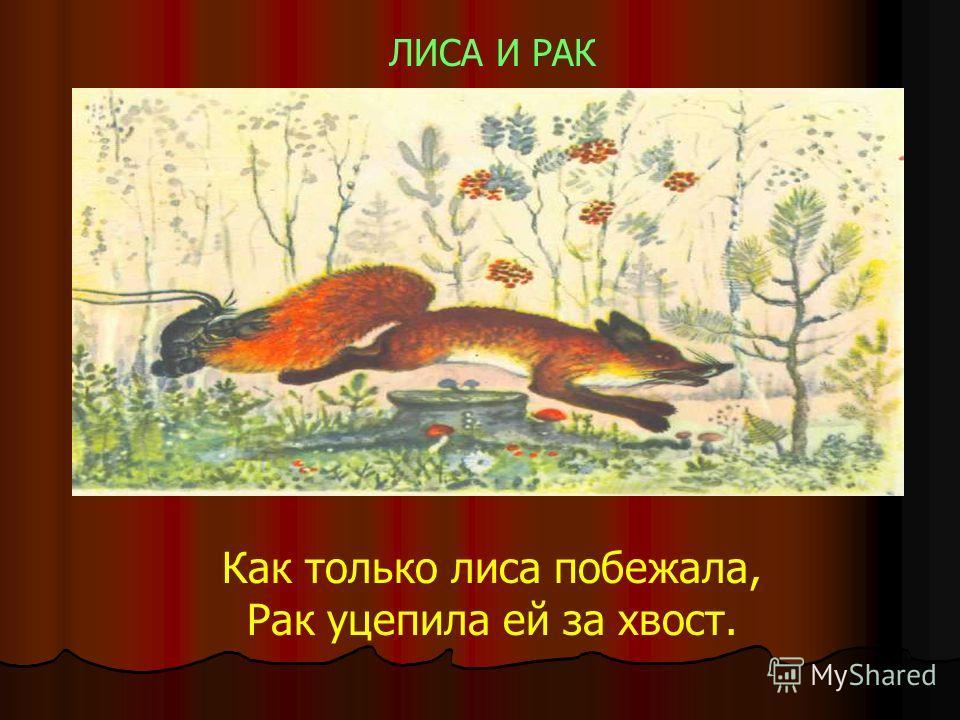 ЛИСА И РАК Как только лиса побежала, Рак уцепила ей за хвост.