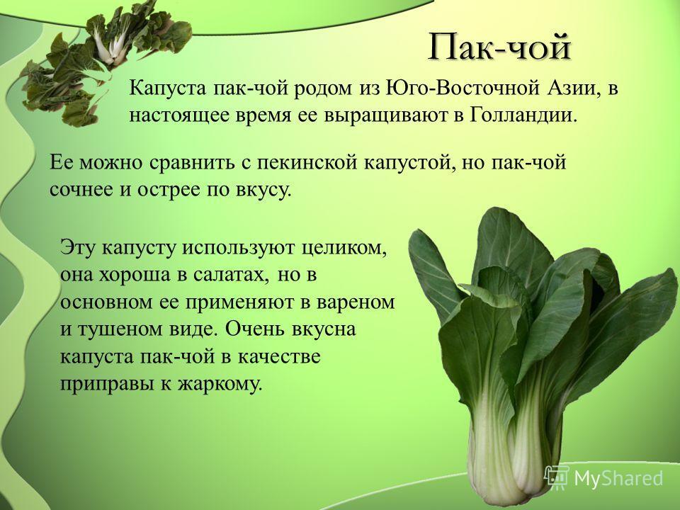 Пак-чой Капуста пак-чой родом из Юго-Восточной Азии, в настоящее время ее выращивают в Голландии. Ее можно сравнить с пекинской капустой, но пак-чой сочнее и острее по вкусу. Эту капусту используют целиком, она хороша в салатах, но в основном ее прим