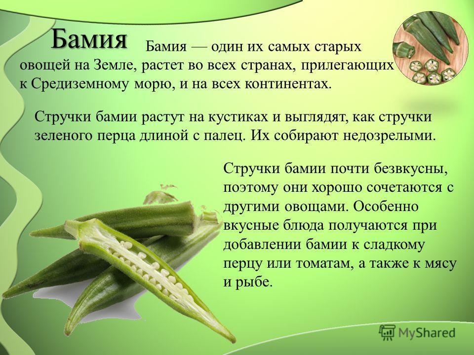 Бамия Бамия один их самых старых овощей на Земле, растет во всех странах, прилегающих к Средиземному морю, и на всех континентах. Стручки бамии растут на кустиках и выглядят, как стручки зеленого перца длиной с палец. Их собирают недозрелыми. Стручки