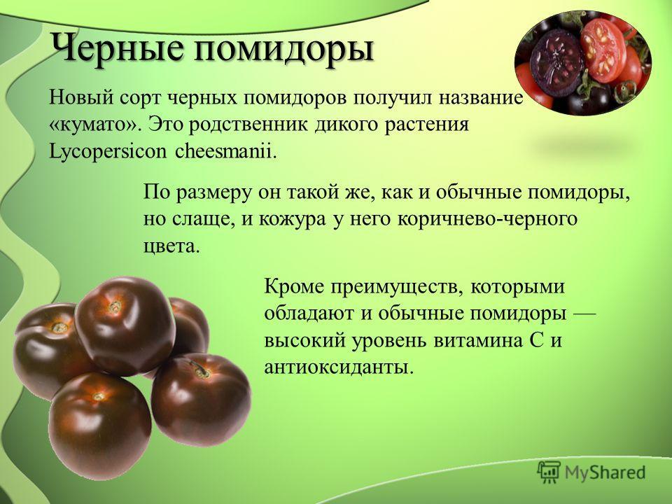 Черные помидоры Новый сорт черных помидоров получил название «кумато». Это родственник дикого растения Lycopersicon cheesmanii. По размеру он такой же, как и обычные помидоры, но слаще, и кожура у него коричнево-черного цвета. Кроме преимуществ, кото