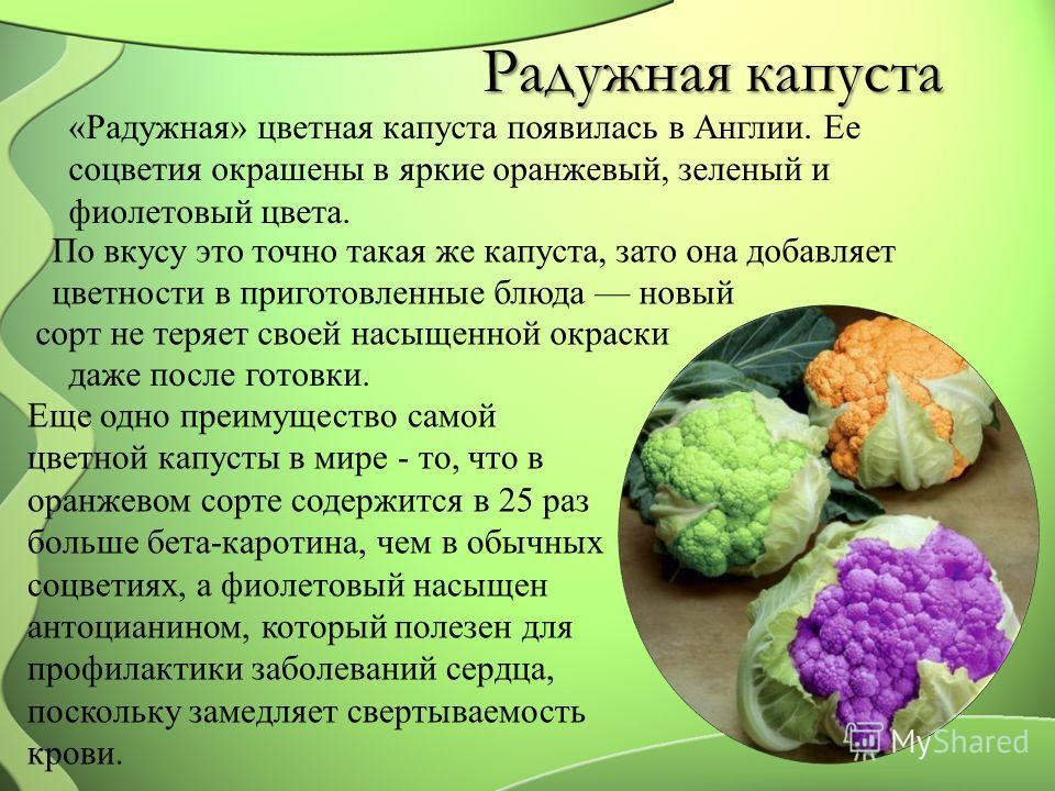 Радужная капуста «Радужная» цветная капуста появилась в Англии. Ее соцветия окрашены в яркие оранжевый, зеленый и фиолетовый цвета. По вкусу это точно такая же капуста, зато она добавляет цветности в приготовленные блюда новый сорт не теряет своей на