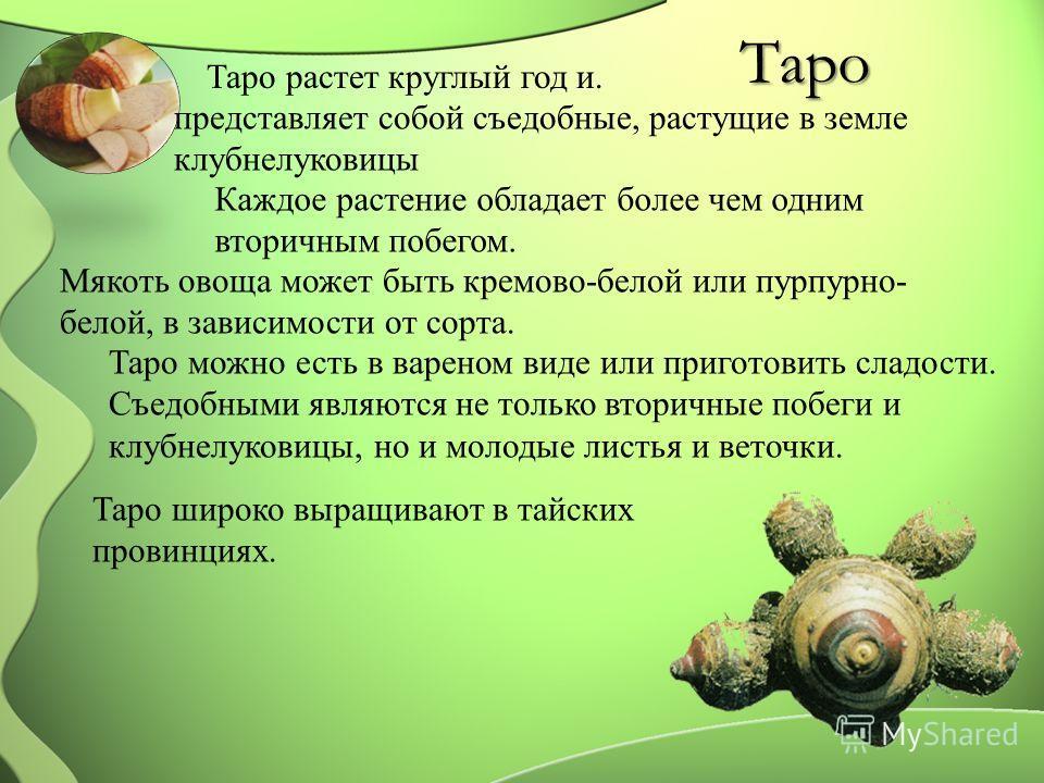 Таро Таро растет круглый год и. представляет собой съедобные, растущие в земле клубнелуковицы Каждое растение обладает более чем одним вторичным побегом. Мякоть овоща может быть кремово-белой или пурпурно- белой, в зависимости от сорта. Таро можно ес